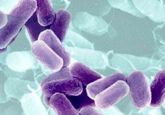 irodatakaritas baktérium tisztítás|irodatakarítás probiotikus
