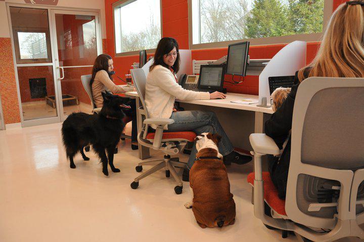 boldog kutya|kutya iroda|kutya az irodában|kutya barát iroda