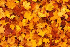 őszi_zöldterület_gondozás